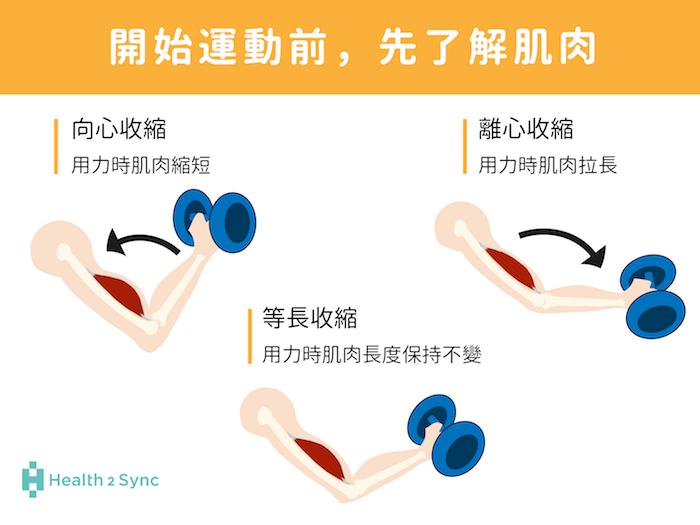 肌肉的收縮,可分為等長收縮與等張收縮,等張收縮可再細分為:用力時肌肉縮短的向心收縮,和用力時肌肉拉長的離心收縮